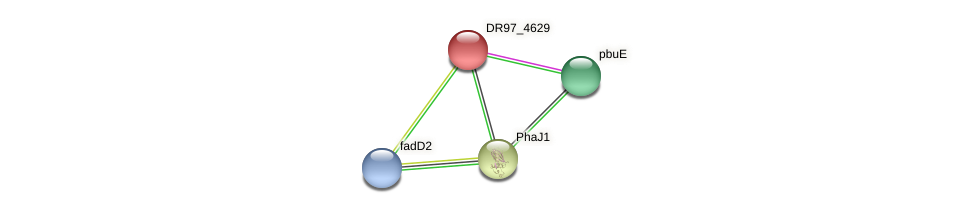 DR97_4629 protein (Pseudomonas aeruginosa) - STRING interaction network