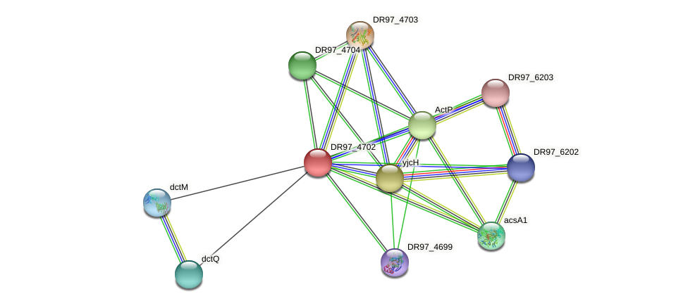 DR97_4702 protein (Pseudomonas aeruginosa) - STRING interaction network