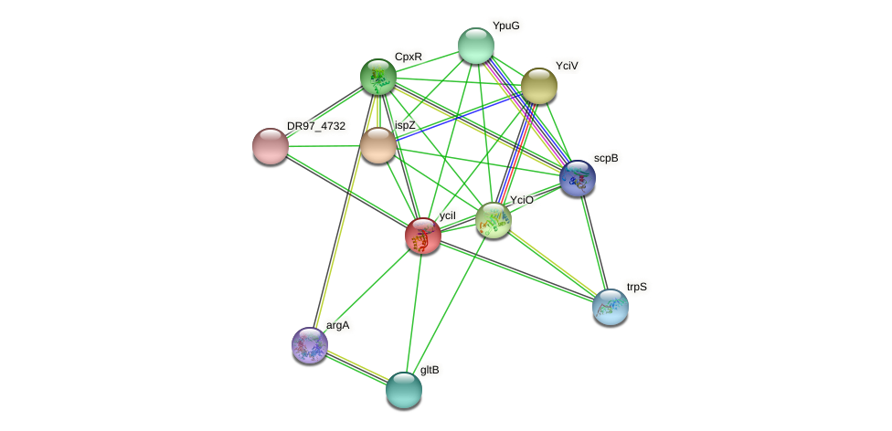 yciI protein (Pseudomonas aeruginosa) - STRING interaction network