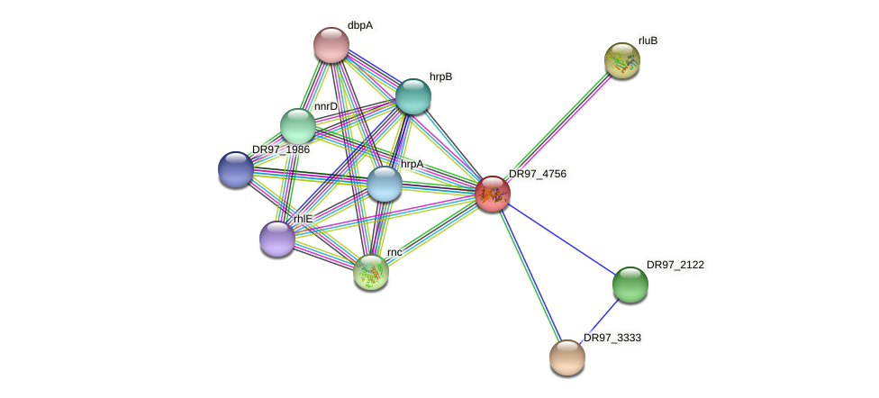 DR97_4756 protein (Pseudomonas aeruginosa) - STRING interaction network