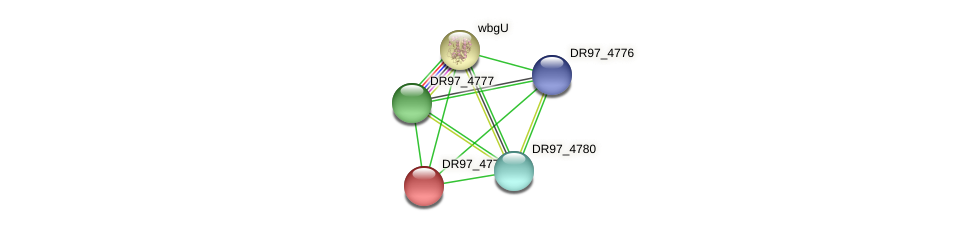 DR97_4779 protein (Pseudomonas aeruginosa) - STRING interaction network