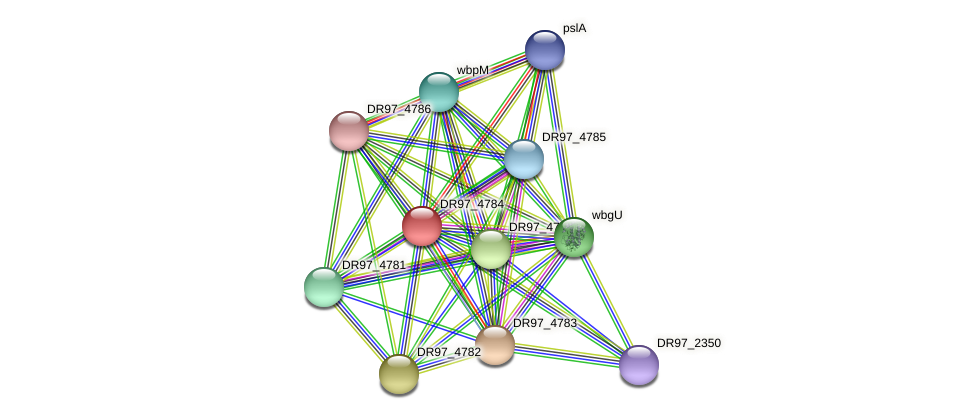 DR97_4784 protein (Pseudomonas aeruginosa) - STRING interaction network
