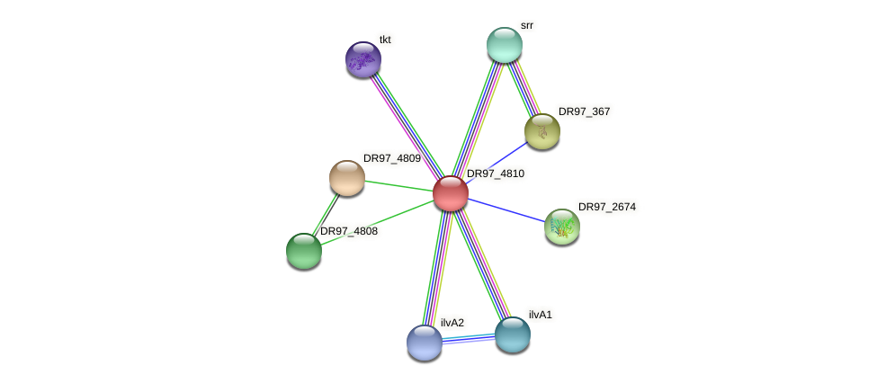 DR97_4810 protein (Pseudomonas aeruginosa) - STRING interaction network
