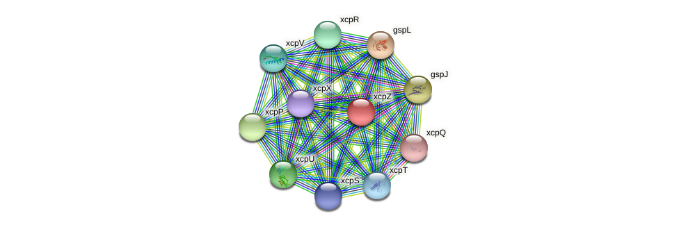 xcpZ protein (Pseudomonas aeruginosa) - STRING interaction network