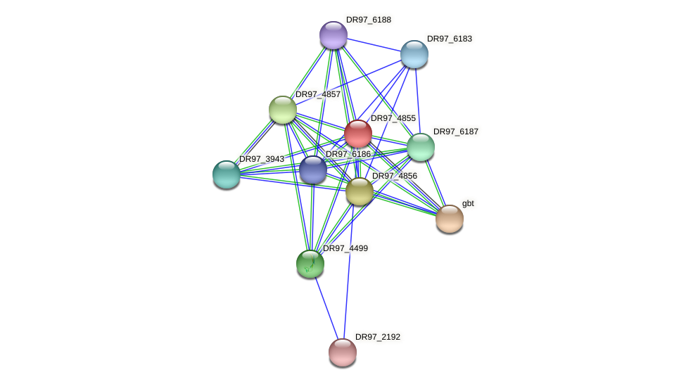 DR97_4855 protein (Pseudomonas aeruginosa) - STRING interaction network