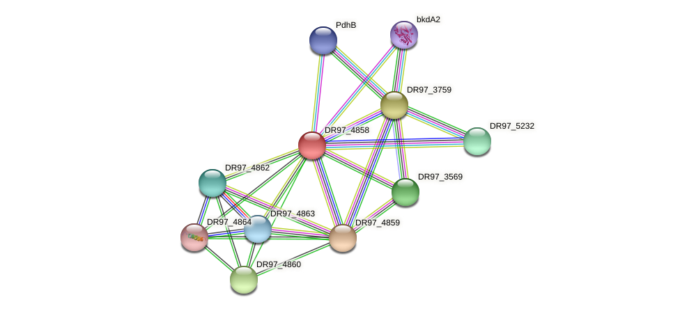 DR97_4858 protein (Pseudomonas aeruginosa) - STRING interaction network