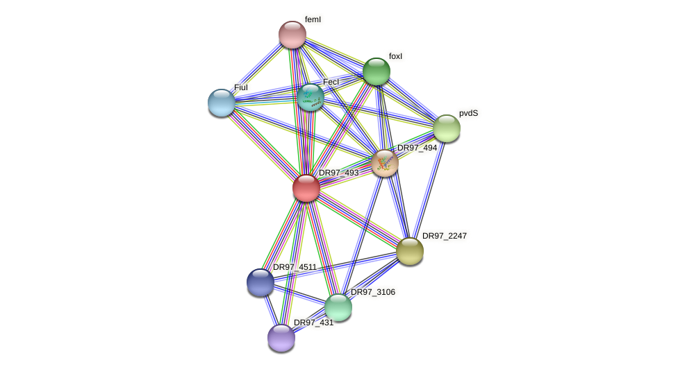 DR97_493 protein (Pseudomonas aeruginosa) - STRING interaction network