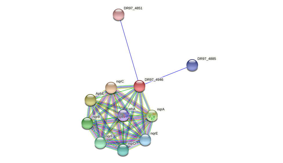 DR97_4946 protein (Pseudomonas aeruginosa) - STRING interaction network