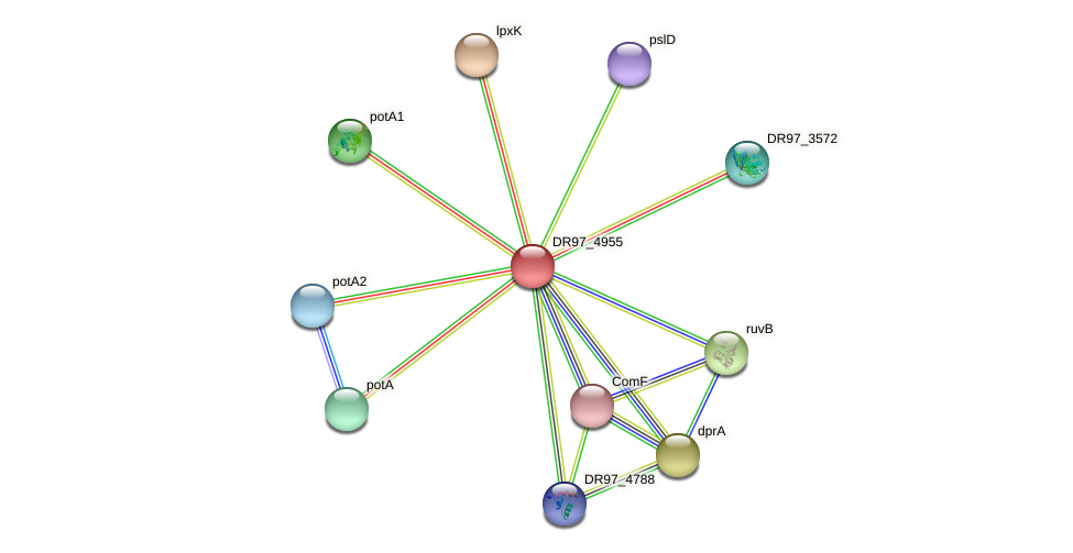 DR97_4955 protein (Pseudomonas aeruginosa) - STRING interaction network