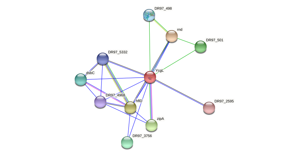 DR97_499 protein (Pseudomonas aeruginosa) - STRING interaction network