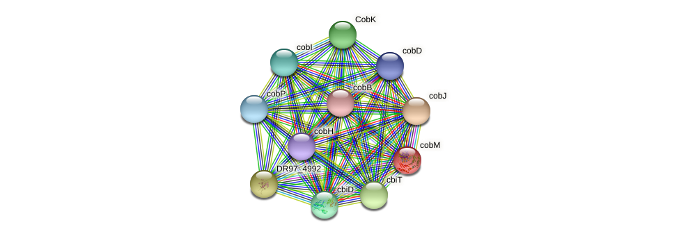 cobM protein (Pseudomonas aeruginosa) - STRING interaction network