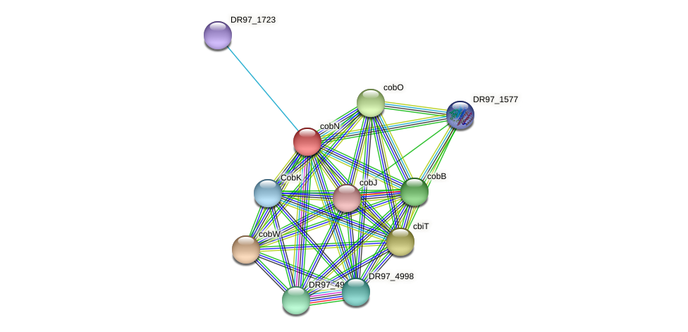 cobN protein (Pseudomonas aeruginosa) - STRING interaction network