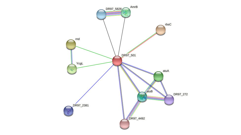 DR97_501 protein (Pseudomonas aeruginosa) - STRING interaction network