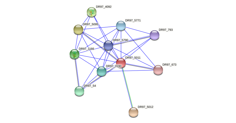 DR97_5011 protein (Pseudomonas aeruginosa) - STRING interaction network