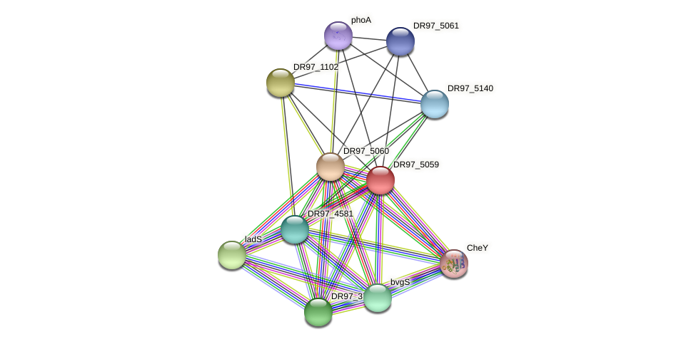 DR97_5059 protein (Pseudomonas aeruginosa) - STRING interaction network