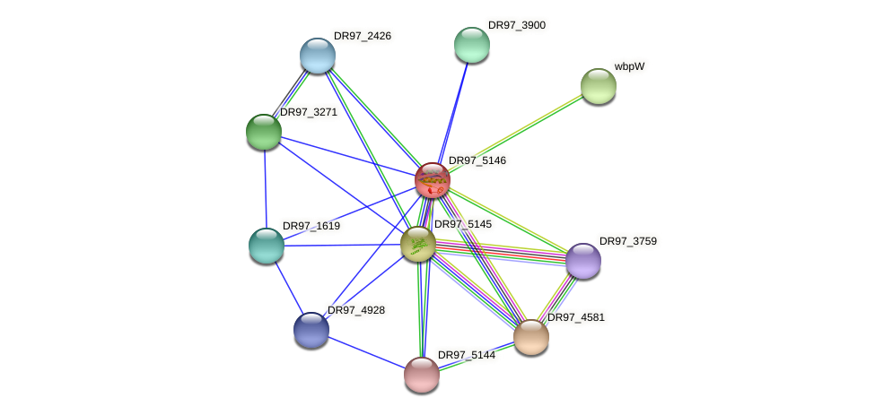 DR97_5146 protein (Pseudomonas aeruginosa) - STRING interaction network