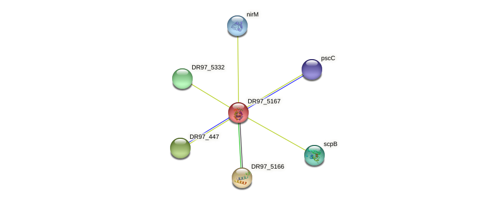 DR97_5167 protein (Pseudomonas aeruginosa) - STRING interaction network