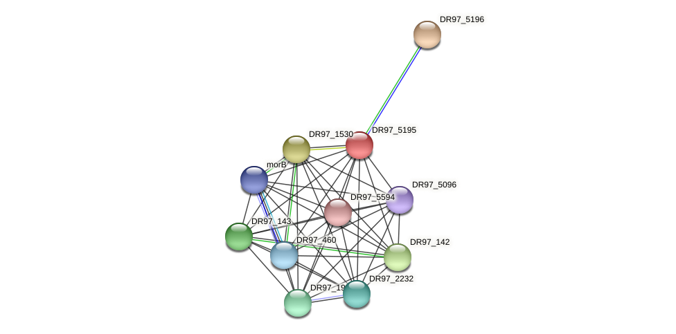 DR97_5195 protein (Pseudomonas aeruginosa) - STRING interaction network