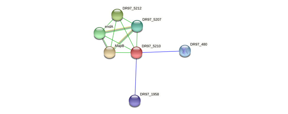 DR97_5210 protein (Pseudomonas aeruginosa) - STRING interaction network