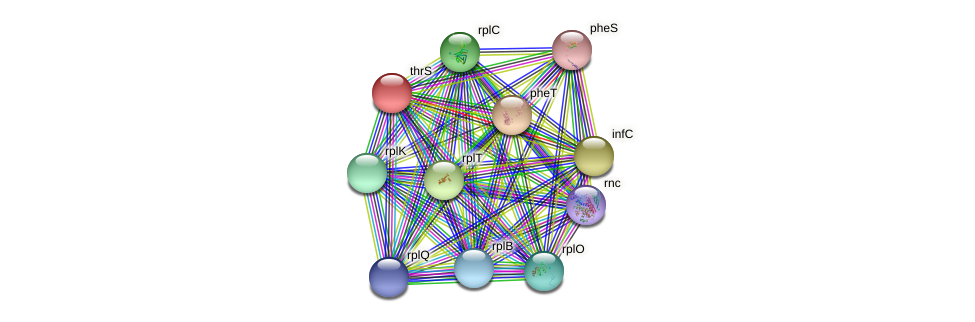 thrS protein (Pseudomonas aeruginosa) - STRING interaction network