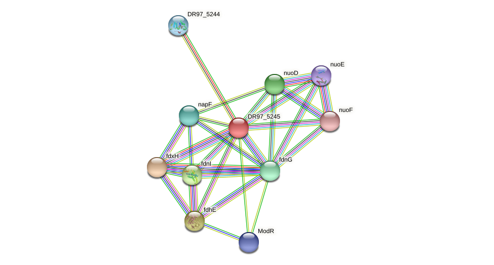 DR97_5245 protein (Pseudomonas aeruginosa) - STRING interaction network