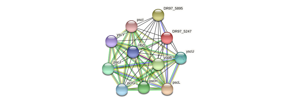 DR97_5247 protein (Pseudomonas aeruginosa) - STRING interaction network