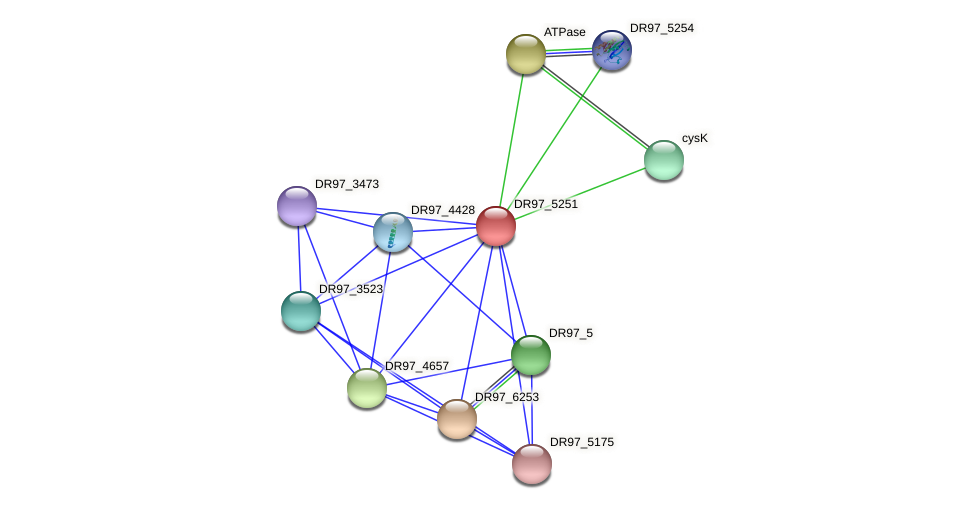 DR97_5251 protein (Pseudomonas aeruginosa) - STRING interaction network