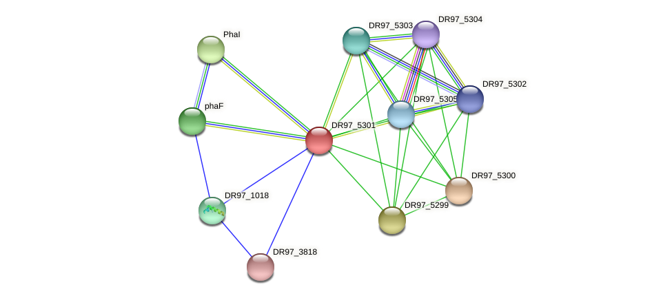 DR97_5301 protein (Pseudomonas aeruginosa) - STRING interaction network
