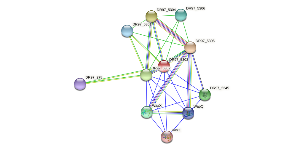 DR97_5303 protein (Pseudomonas aeruginosa) - STRING interaction network