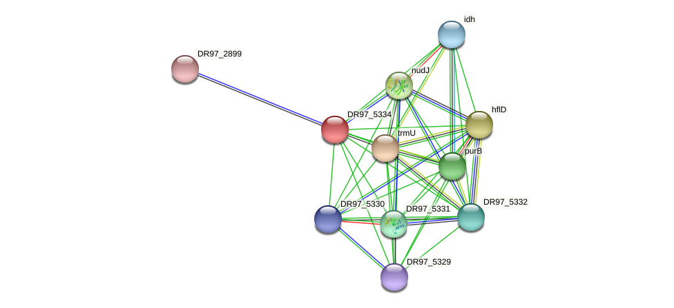 DR97_5334 protein (Pseudomonas aeruginosa) - STRING interaction network