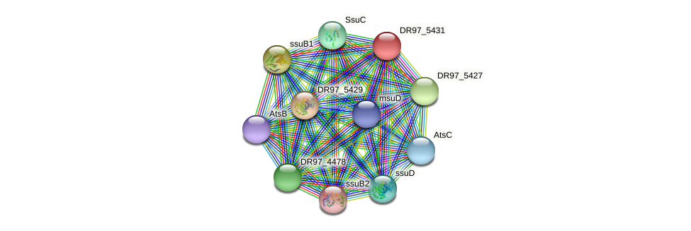 DR97_5431 protein (Pseudomonas aeruginosa) - STRING interaction network