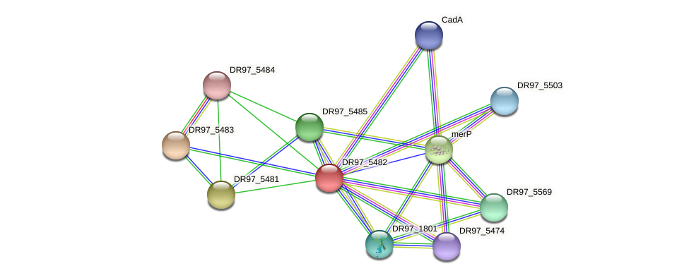 DR97_5482 protein (Pseudomonas aeruginosa) - STRING interaction network