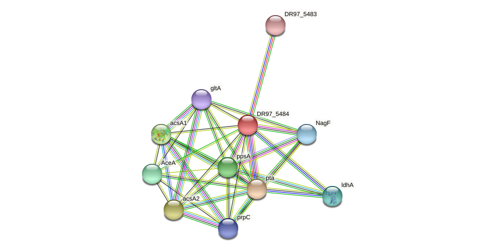 ackA3 protein (Pseudomonas aeruginosa) - STRING interaction network