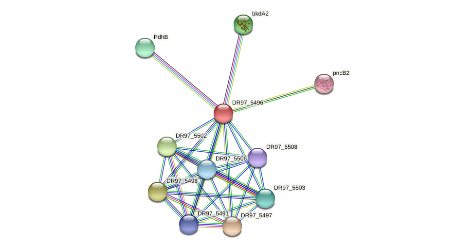 DR97_5496 protein (Pseudomonas aeruginosa) - STRING interaction network