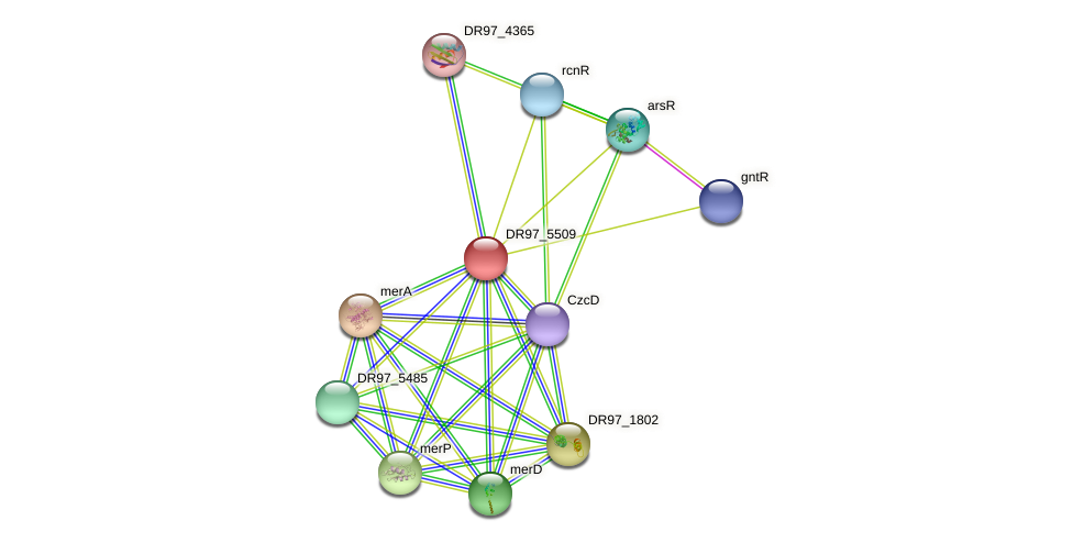 DR97_5509 protein (Pseudomonas aeruginosa) - STRING interaction network
