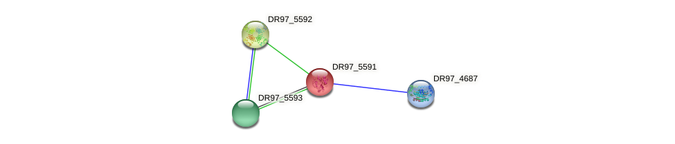 DR97_5591 protein (Pseudomonas aeruginosa) - STRING interaction network