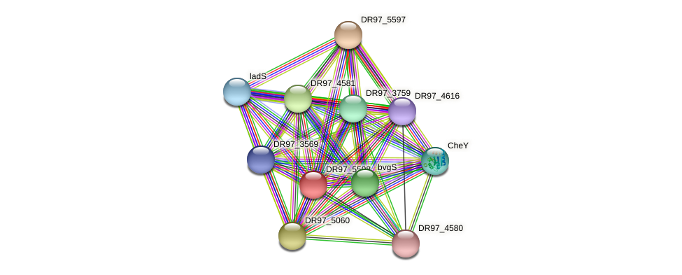 DR97_5598 protein (Pseudomonas aeruginosa) - STRING interaction network