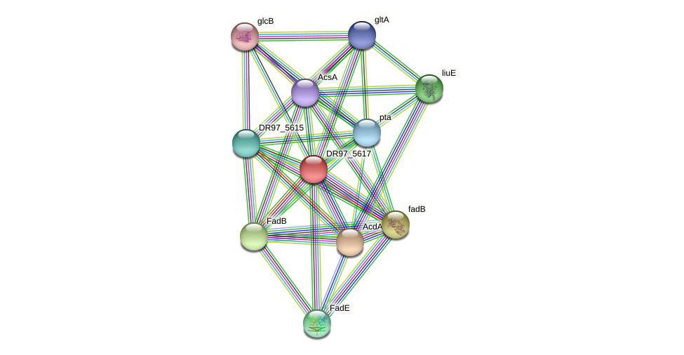 DR97_5617 protein (Pseudomonas aeruginosa) - STRING interaction network