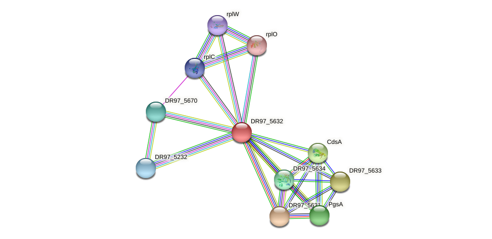 DR97_5632 protein (Pseudomonas aeruginosa) - STRING interaction network