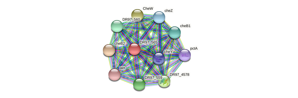 DR97_565 protein (Pseudomonas aeruginosa) - STRING interaction network