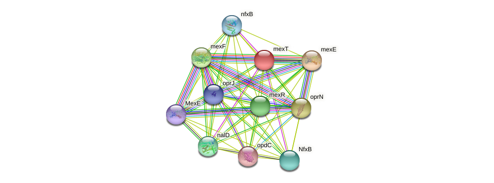 mexT protein (Pseudomonas aeruginosa) - STRING interaction network
