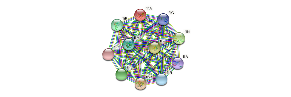flhA protein (Pseudomonas aeruginosa) - STRING interaction network