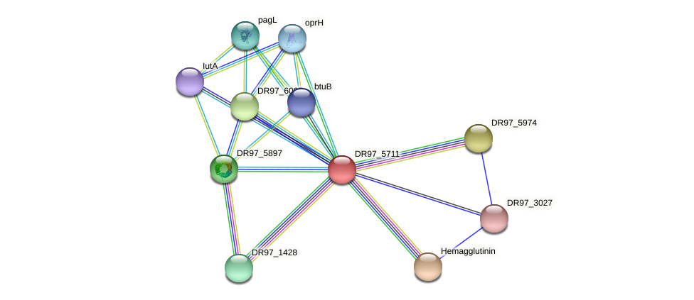 DR97_5711 protein (Pseudomonas aeruginosa) - STRING interaction network