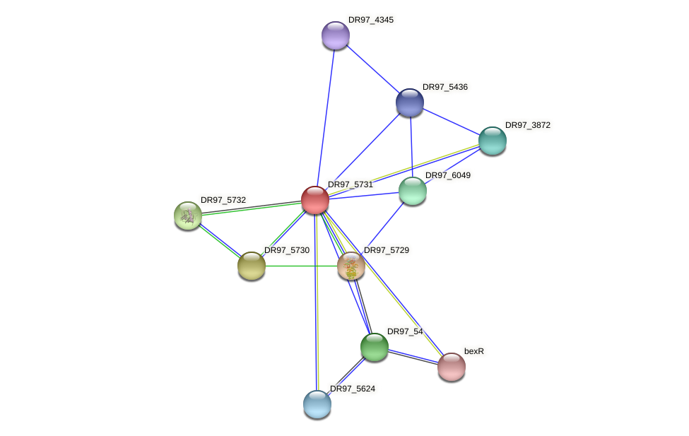DR97_5731 protein (Pseudomonas aeruginosa) - STRING interaction network