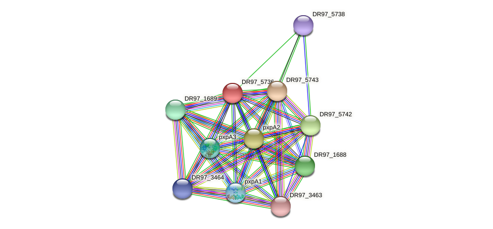 DR97_5736 protein (Pseudomonas aeruginosa) - STRING interaction network
