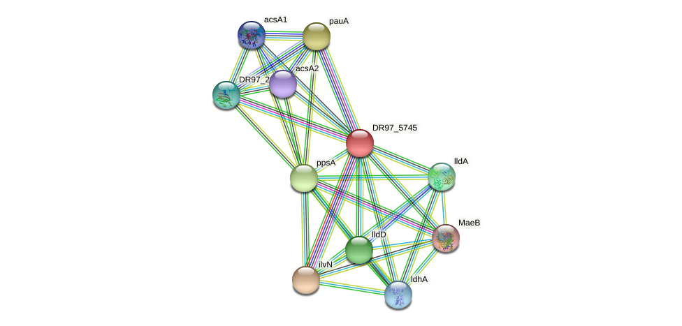 DR97_5745 protein (Pseudomonas aeruginosa) - STRING interaction network