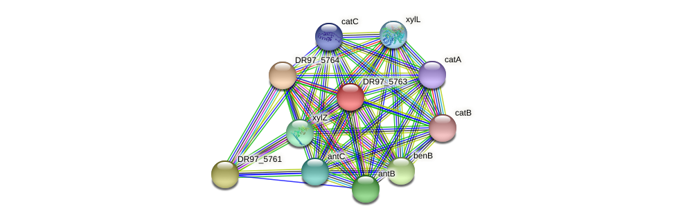 DR97_5763 protein (Pseudomonas aeruginosa) - STRING interaction network
