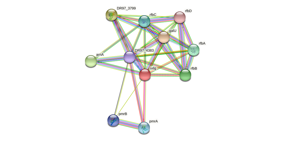 udg3 protein (Pseudomonas aeruginosa) - STRING interaction network