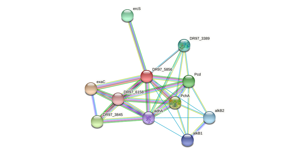DR97_5856 protein (Pseudomonas aeruginosa) - STRING interaction network