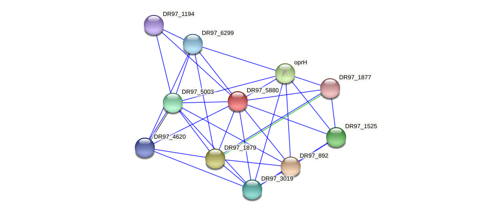 DR97_5880 protein (Pseudomonas aeruginosa) - STRING interaction network